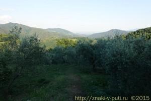 Оливковая роща у дома