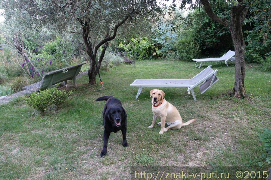 Смилла и Гуапа - наши подопечные прямо сейчас, в Тоскане