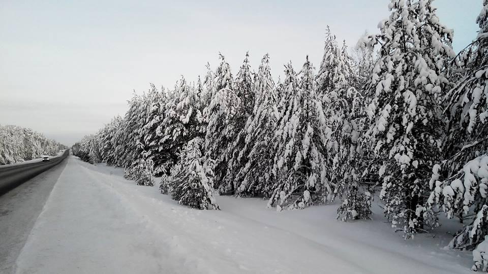 снег лес